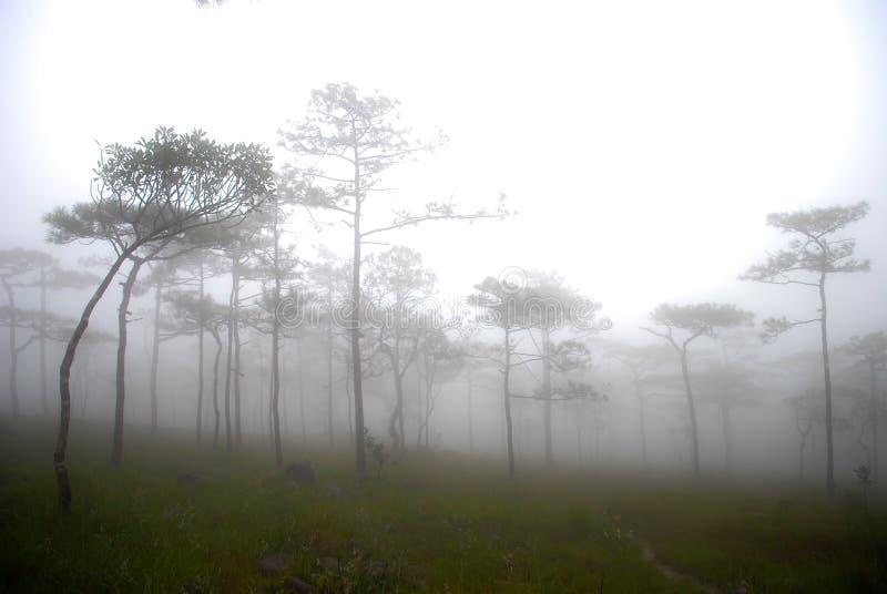 Δέντρα πεύκων στην κορυφή του βουνού στοκ φωτογραφίες