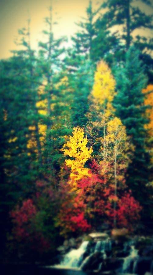 δέντρα πεύκων φθινοπώρου στοκ εικόνα με δικαίωμα ελεύθερης χρήσης