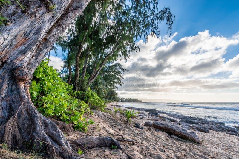 Δέντρα πεύκων, φοίνικες και τροπική βλάστηση στην παραλία ηλιοβασιλέματος στη Χαβάη στοκ φωτογραφίες