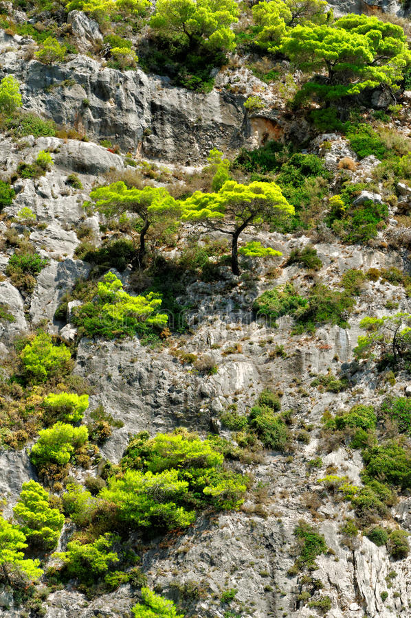 Δέντρα πεύκων mountainside στοκ φωτογραφίες με δικαίωμα ελεύθερης χρήσης