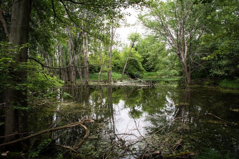 Δέντρα που απεικονίζουν στο ήρεμο νερό στοκ φωτογραφία με δικαίωμα ελεύθερης χρήσης