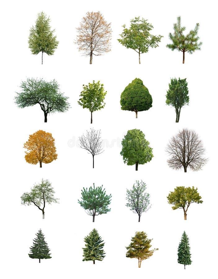 Δέντρα που απομονώνονται στοκ φωτογραφία με δικαίωμα ελεύθερης χρήσης