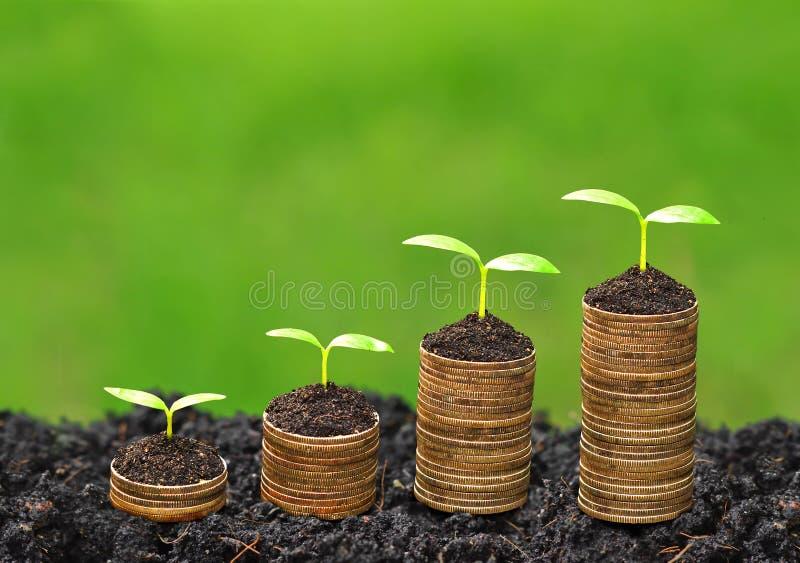 Δέντρα που αυξάνονται στα νομίσματα στοκ φωτογραφία με δικαίωμα ελεύθερης χρήσης