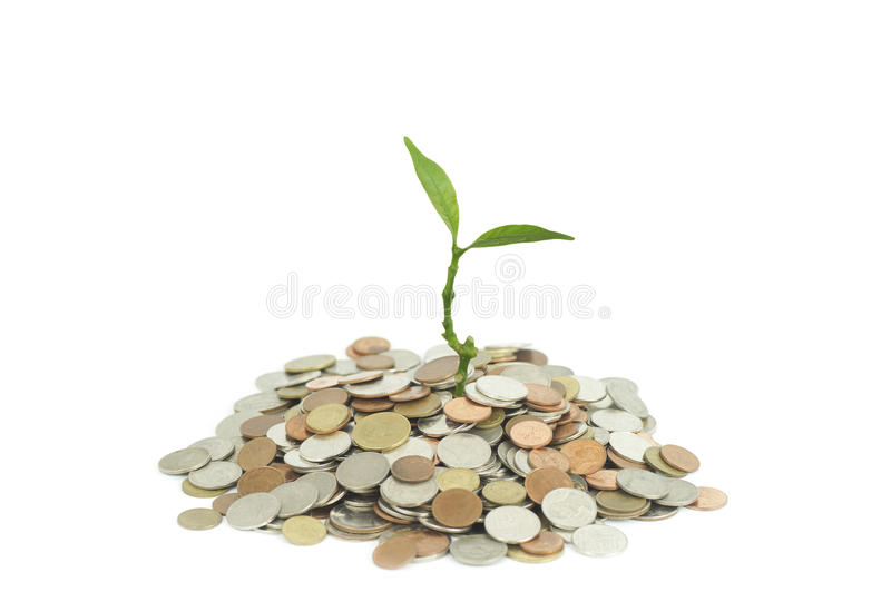Δέντρα που αυξάνονται στα νομίσματα στοκ φωτογραφίες με δικαίωμα ελεύθερης χρήσης