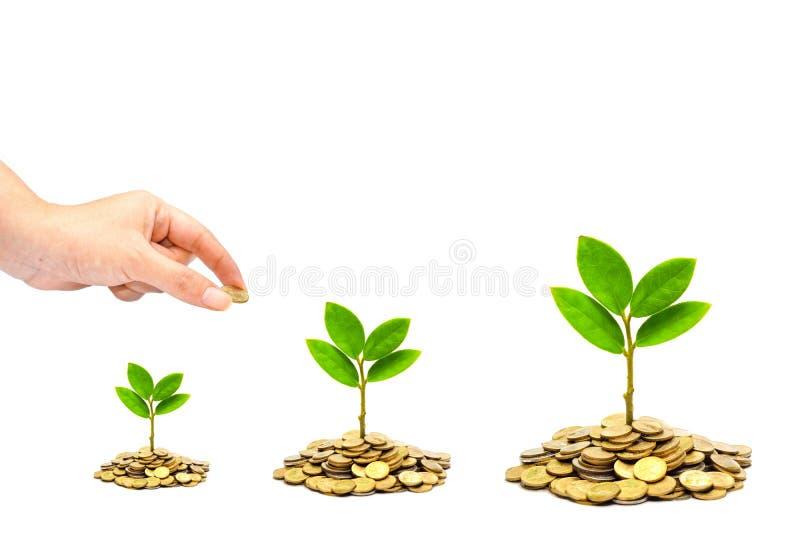 Δέντρα που αυξάνονται στα νομίσματα/csr στοκ εικόνες