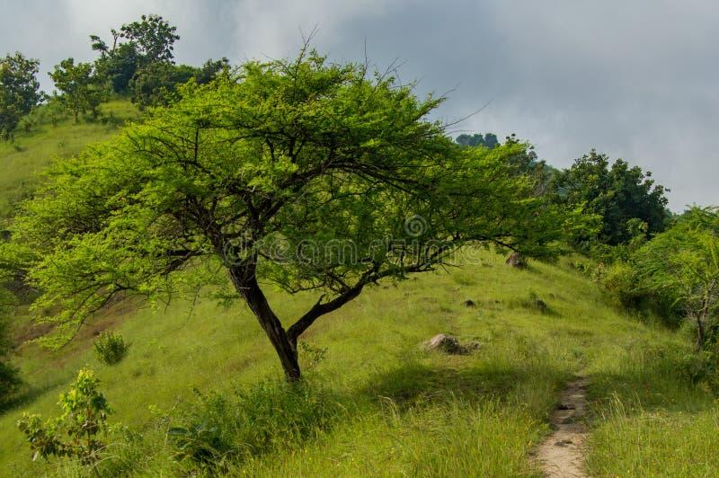 Δέντρα που βλέπουν σκιερά από πίσω από τη χλόη με μια άποψη της πορείας στοκ εικόνες με δικαίωμα ελεύθερης χρήσης