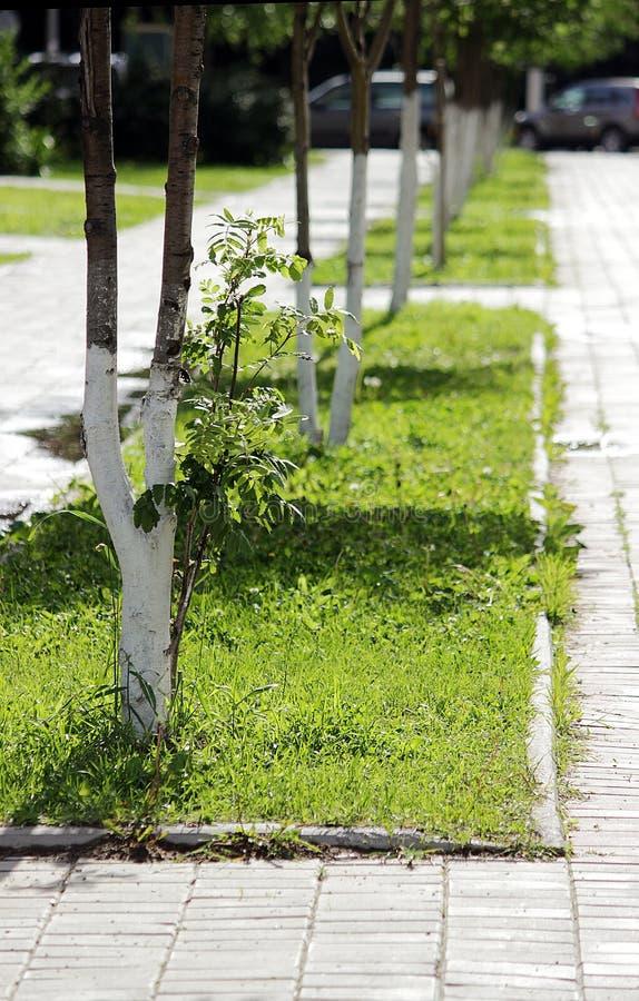 Δέντρα που φυτεύονται από την πόλη, Μόσχα, Ρωσία στοκ εικόνα με δικαίωμα ελεύθερης χρήσης