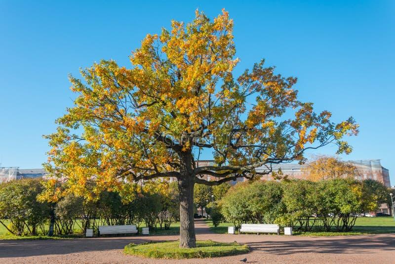 Δέντρα πτώσης με το κιτρινισμένο φύλλωμα στο ηλιόλουστο πάρκο Οκτωβρίου στοκ εικόνες