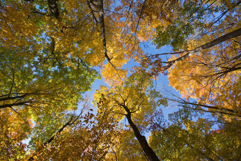 δέντρα πτώσης στοκ εικόνες