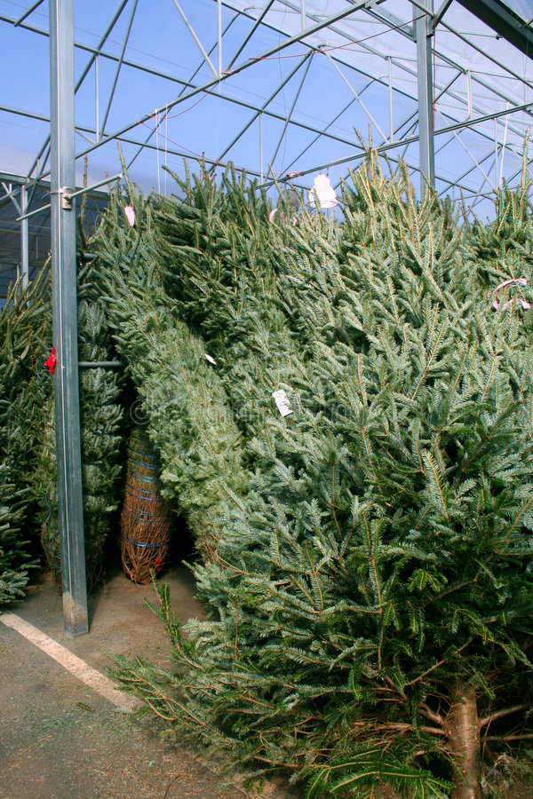 δέντρα πώλησης Χριστουγέννων στοκ εικόνα