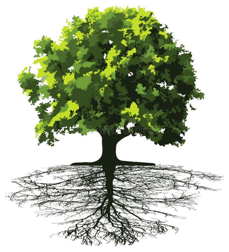 δέντρα ριζών απεικόνιση αποθεμάτων