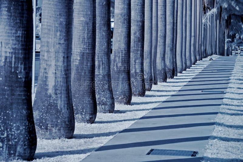 δέντρα σειρών πάρκων φοινικώ στοκ φωτογραφία με δικαίωμα ελεύθερης χρήσης