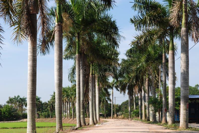 δέντρα σειρών φοινικών στοκ εικόνες