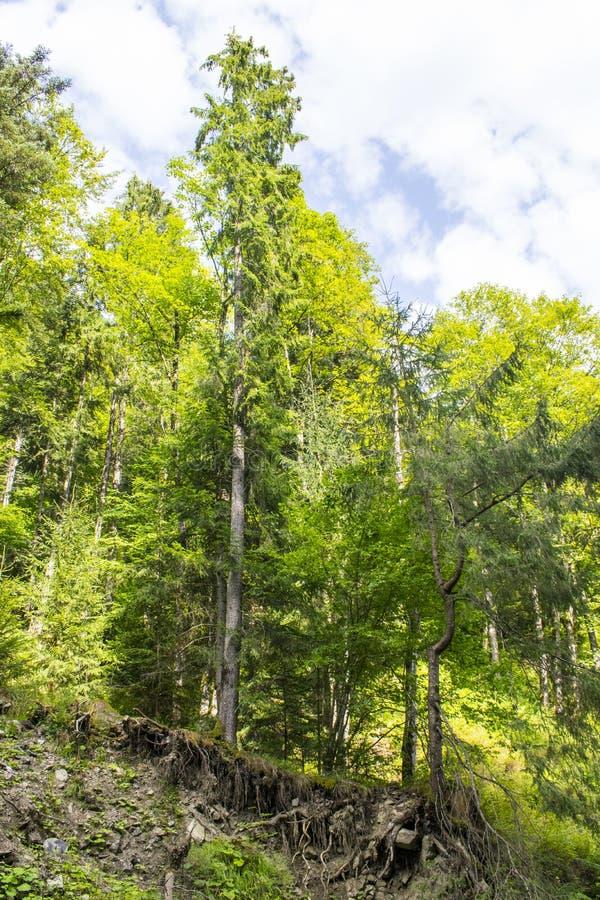 Δέντρα σε έναν απότομο βράχο στοκ φωτογραφία με δικαίωμα ελεύθερης χρήσης