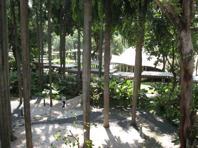 Δέντρα σε ένα πάρκο στη πράσινη ζώνη Makati, πόλη Makati στοκ φωτογραφία με δικαίωμα ελεύθερης χρήσης