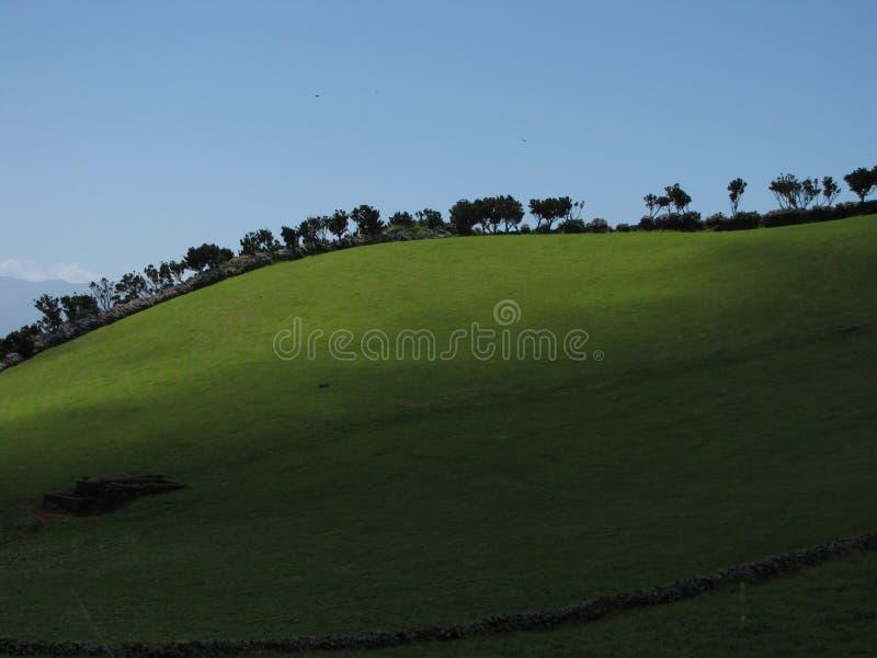 Δέντρα σε μια σειρά στοκ εικόνα με δικαίωμα ελεύθερης χρήσης