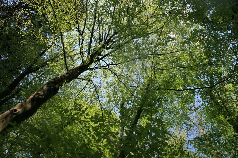 Δέντρα σε πιό forrest, εικόνα που λαμβάνεται από το έδαφος στην κορυφή των δέντρων στοκ φωτογραφίες