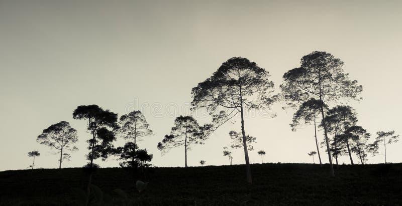 Δέντρα σκιαγραφιών στο λόφο στοκ φωτογραφίες