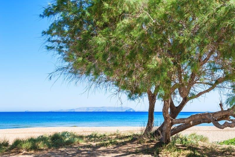 Download Δέντρα στην άγρια τροπική παραλία Στοκ Εικόνες - εικόνα από άμμος, ναυτικό: 62717152