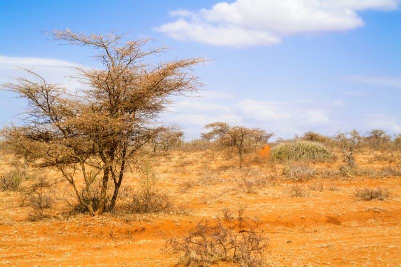 Δέντρα στην Αιθιοπία στοκ εικόνα με δικαίωμα ελεύθερης χρήσης