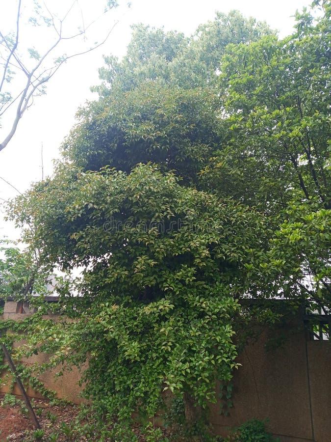 Δέντρα στην ηλιοφάνεια στοκ εικόνα με δικαίωμα ελεύθερης χρήσης
