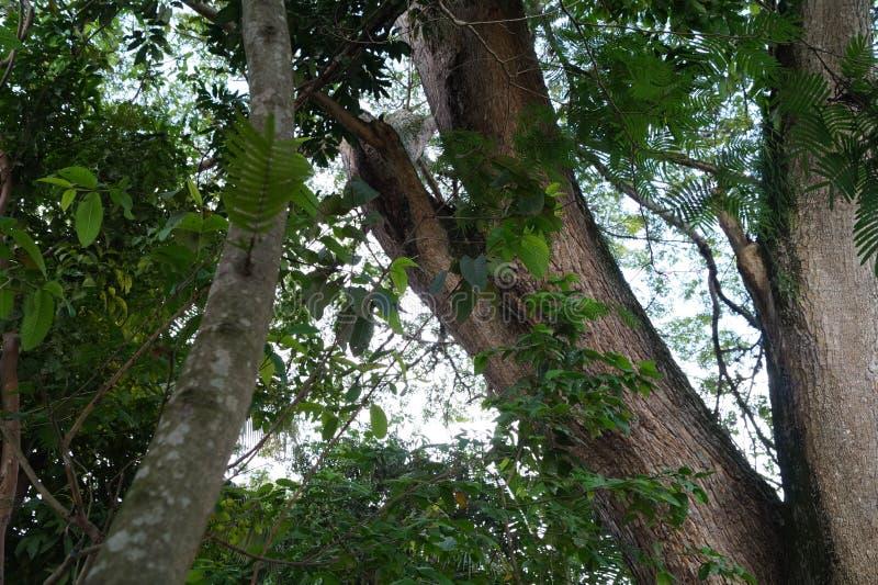 Δέντρα στην Κολομβία στοκ εικόνα με δικαίωμα ελεύθερης χρήσης