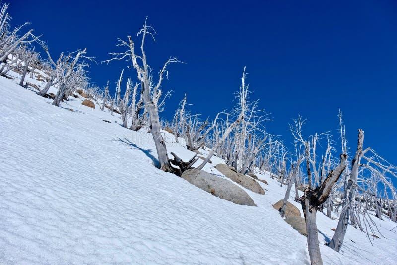Δέντρα στην κορυφή βουνών στοκ φωτογραφίες με δικαίωμα ελεύθερης χρήσης