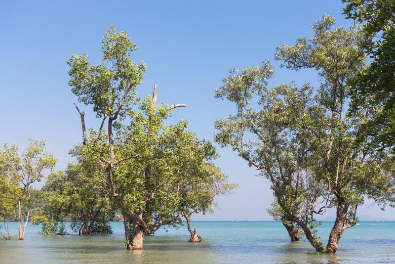 Δέντρα στην παραλία ανατολικού Railay στοκ εικόνες με δικαίωμα ελεύθερης χρήσης