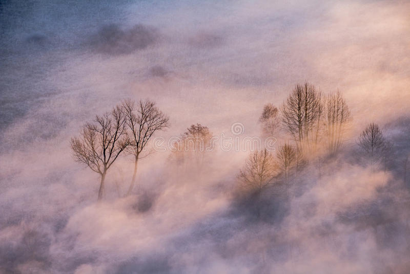 Δέντρα στην υδρονέφωση πρωινού στοκ φωτογραφία με δικαίωμα ελεύθερης χρήσης