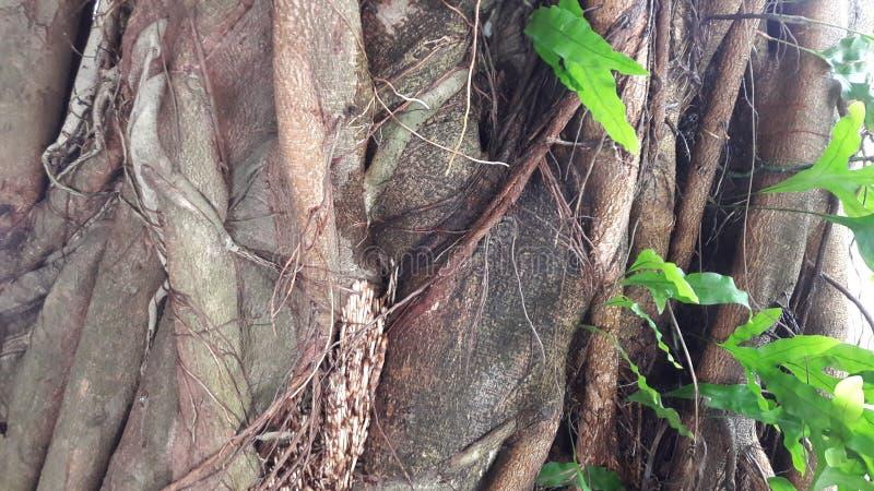 Δέντρα στη Σρι Λάνκα στοκ εικόνα