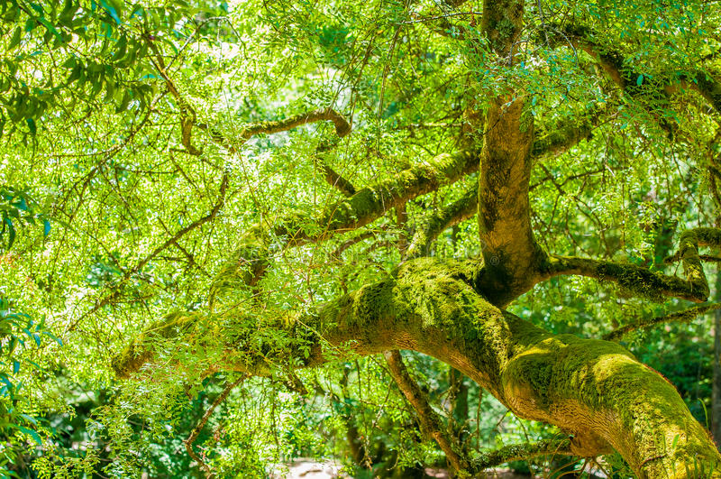 Δέντρα στον κήπο στοκ εικόνες