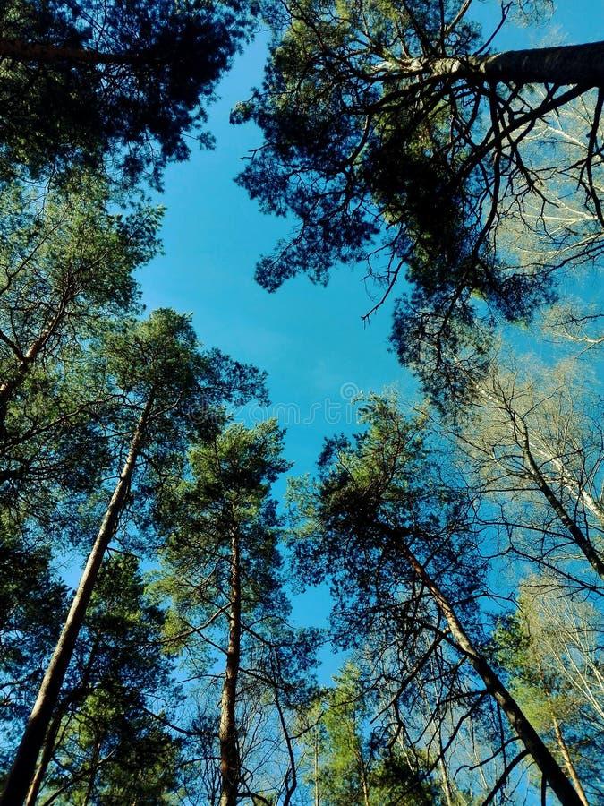 Δέντρα στον ουρανό στοκ φωτογραφία