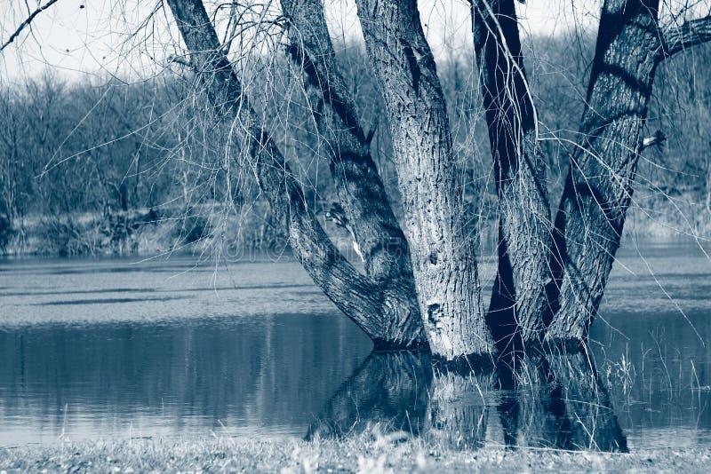 δέντρα στον ποταμό την άνοιξη σε ψηλά νερά, ύπαιθρος Το κλασικό μπλε είναι η κύρια τάση χρωμάτων του 2020 στοκ φωτογραφίες με δικαίωμα ελεύθερης χρήσης