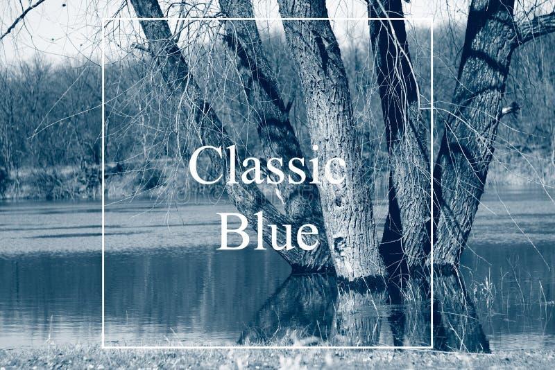 δέντρα στον ποταμό την άνοιξη σε ψηλά νερά, ύπαιθρος Το κλασικό μπλε είναι η κύρια τάση χρωμάτων του 2020 στοκ εικόνα με δικαίωμα ελεύθερης χρήσης