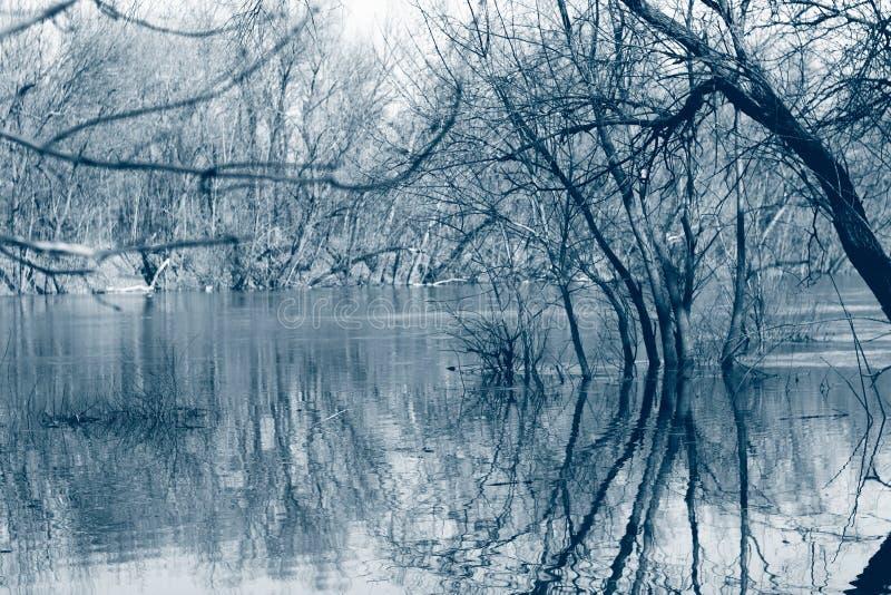 δέντρα στον ποταμό την άνοιξη σε ψηλά νερά, ύπαιθρος Το κλασικό μπλε είναι η κύρια τάση χρωμάτων του 2020 στοκ φωτογραφία με δικαίωμα ελεύθερης χρήσης
