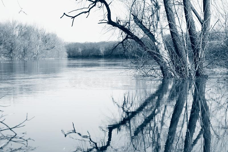 δέντρα στον ποταμό την άνοιξη σε ψηλά νερά, ύπαιθρος Το κλασικό μπλε είναι η κύρια τάση χρωμάτων του 2020 στοκ εικόνες