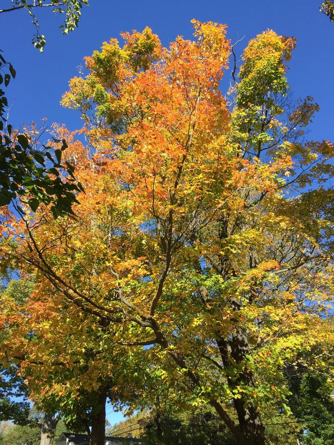 Δέντρα στο δέντρο φθινοπώρου nyc το απόγευμα στοκ εικόνα με δικαίωμα ελεύθερης χρήσης