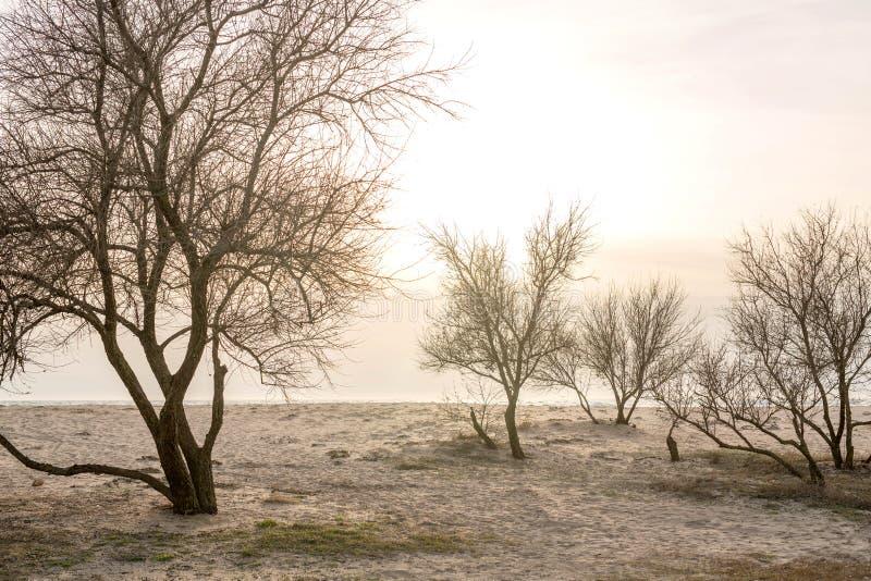 Δέντρα στο ηλιοβασίλεμα θαλασσίως την πρώιμη άνοιξη στοκ εικόνα