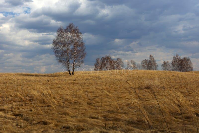 Δέντρα στο λιβάδι ενάντια στον ουρανό άνοιξη στοκ εικόνα