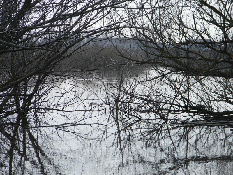 δέντρα στο νερό στοκ φωτογραφία με δικαίωμα ελεύθερης χρήσης