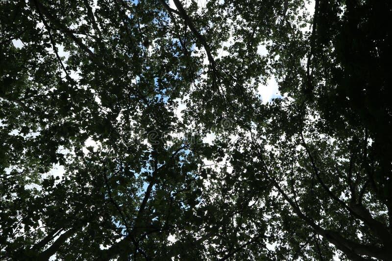 Δέντρα στο πάρκο και το μπλε ουρανό, συμπαθητική ημέρα στοκ εικόνα