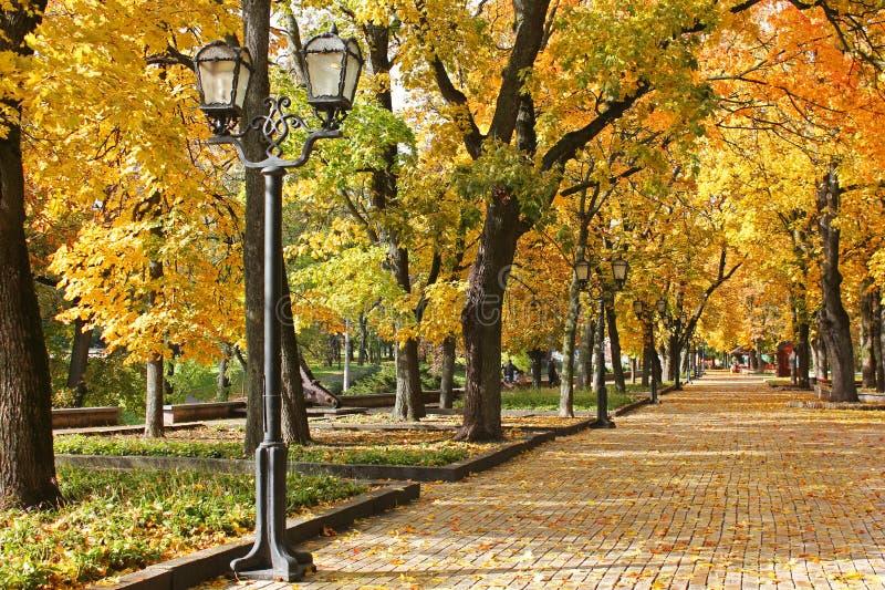 Δέντρα στο πάρκο το φθινόπωρο τοπίο φθινοπώρου αστικό στοκ φωτογραφία με δικαίωμα ελεύθερης χρήσης
