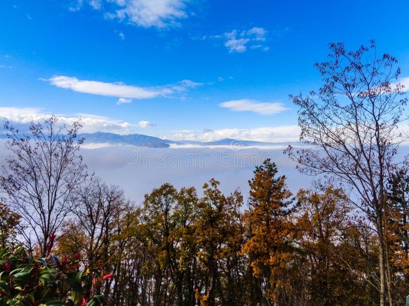 Δέντρα στο πρώτο πλάνο με την ομίχλη στοκ εικόνες