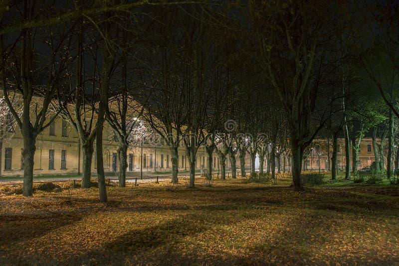 Δέντρα στο σκοτάδι στην προσπάθεια πόλεων Daugavpils στοκ εικόνες