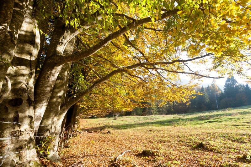 Δέντρα στο υπόβαθρο εποχής φθινοπώρου Φθινόπωρο lansdscape στοκ εικόνα
