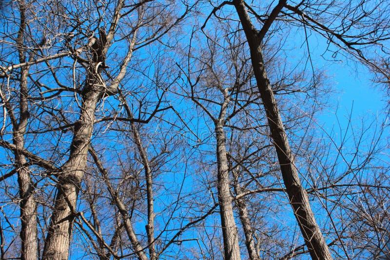 Δέντρα στο υπόβαθρο μπλε ουρανού στοκ εικόνες