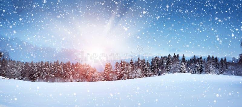 Δέντρα στο χειμερινό τοπίο στοκ φωτογραφίες