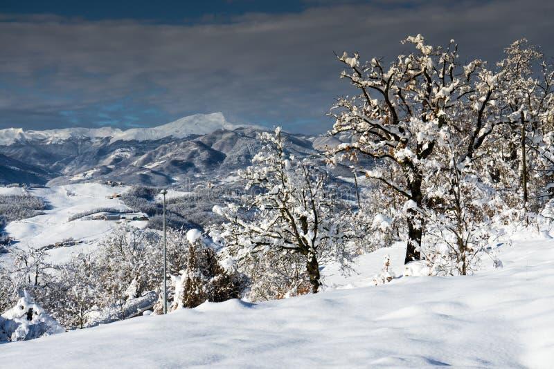 Δέντρα στο χιόνι με το βουνό στοκ εικόνες με δικαίωμα ελεύθερης χρήσης