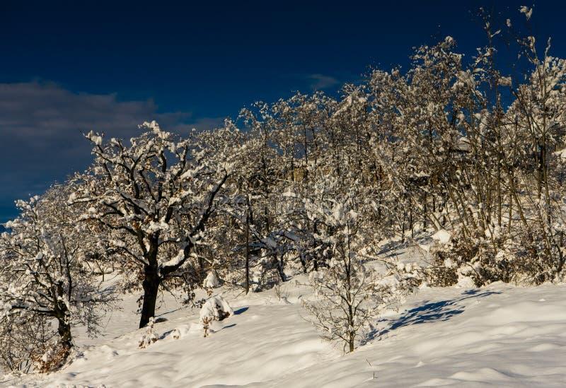 Δέντρα στο χιόνι στοκ εικόνες με δικαίωμα ελεύθερης χρήσης