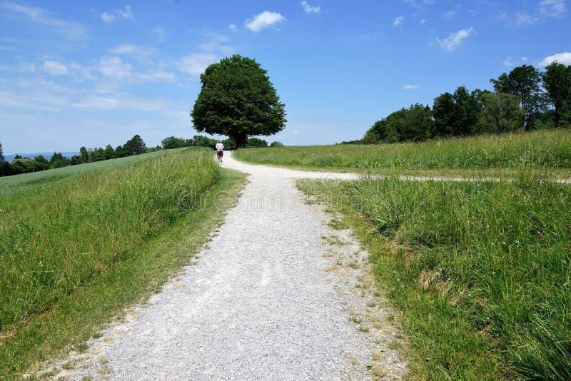 Δέντρα στο zollikon στοκ φωτογραφία με δικαίωμα ελεύθερης χρήσης